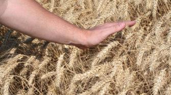 Productores de granos se capacitan para lograr sistemas más productivos