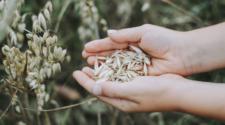 Productores de granos y oleaginosas adoptan prácticas sustentables