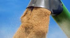 Reportan capacidad de almacenamiento de granos en México
