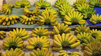 Calor afecta exportación de plátanos tailandeses de México