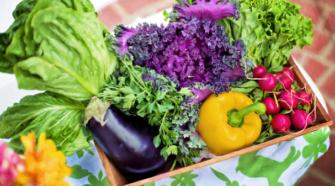Comunidad veracruzana opta por alimentos orgánicos