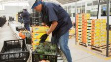 Exportaciones agropecuarias, un bien para la economía mexicana