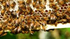 Se incrementa robo de colmenas en Zacatecas