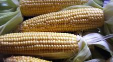 Presentan programa para impulsar la producción de maíz
