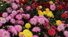 Xochimilco será participe en la feria ornamental más grande del mundo
