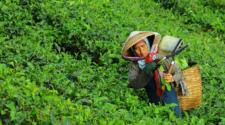 Agricultura orgánica ayuda a mitigar la pobreza al norte de China