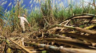 Cañeros piden apoyos por extensas sequías en el país
