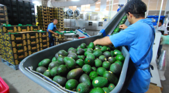 Aumenta superávit agroalimentario en primer semestre de 2019