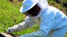 Capacitan a productores de miel orgánica en Yucatán