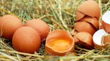 Consumidores deben comprar huevo de forma responsable: HSI
