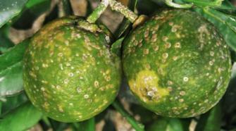 Entregan insumos orgánicos para combatir plaga en Yucatán