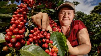 México, décimo primer lugar en producción de café en el mundo