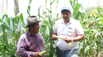 Productor de maíz narra su experiencia al cultivar de forma orgánica