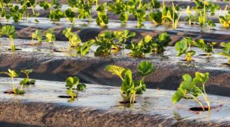 Sin producción agrícola sustentable no se podrá garantizar el futuro