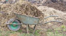 Sugieren desechos animales como fertilizantes orgánicos