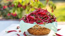 Aumenta producción de chile picante en México