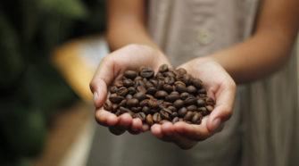 Exhorta senador a mejorar la calidad del café para aumentar precios