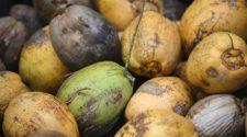 Las cáscaras de coco pueden convertirse en fertilizante orgánico