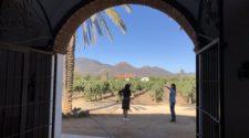 La vitivinicultura tiende a globalizarse: OIV