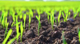 "Autoridades de Michoacán anuncian ""uso cero"" de agroquímicos"