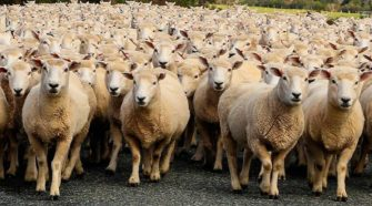 Desarrollan proyecto para obtener biofertilizantes a partir de lana