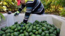 Exportaciones agroalimentarias de México suben 8.6% en 2019