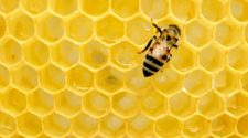 Legisladores de Q Roo presentan propuestas para protección de las abejas