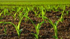 Biodiversidad de los suelos: fundamental para mantener ecosistemas sanos