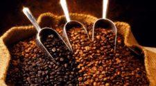 Productor de café orgánico preserva hábitat con sus ingresos