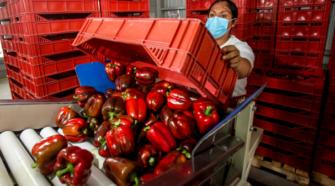 Aumenta 17% superávit agroalimentario de México