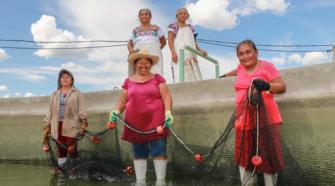 Consumo per cápita de pescado en México aumenta de 9 a 13 kilos