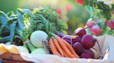 Crece 15% cultivo de orgánicos en el mundo