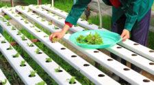 Desarrolla el IPN tecnología limpia para mayor productividad de cultivos