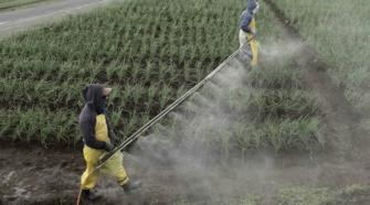 Emisiones agrícolas podrían reducirse con reforestación