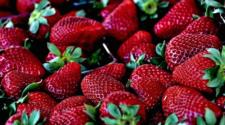 Nuevo biofertilizante mejora las propiedades nutritivas de las fresas