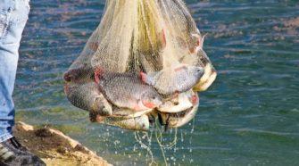 Reconoce la Conapesca esfuerzos de acuacultura y pesca sostenibles
