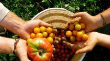 Agricultura sostenida por la comunidad