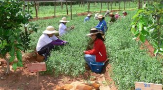 Agricultores eficientes y organizados en cooperativas