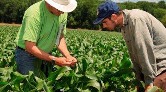 El ABC de las ventas agrícolas