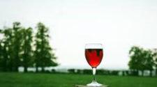 Crece demanda de vino ecológico, pero se frena producción