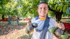Cuatro municipios de Michoacán son declarados libres de plagas del aguacate