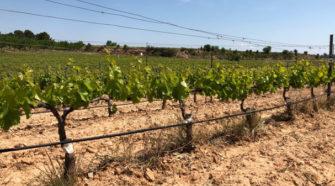 La UE prolonga autorización para pesticidas a base de cobre en orgánicos