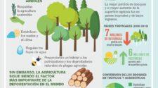 Más bosques más alimentos
