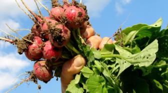 Ocupa México 4º lugar mundial en producción de orgánicos