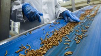 Ingenieros diseñan granja de insectos para tratamiento de residuos