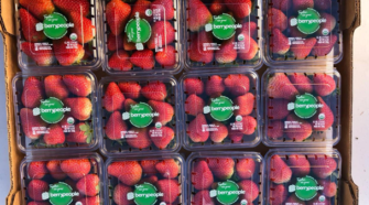 Marca de fresas orgánicas incrementa producción en Baja California