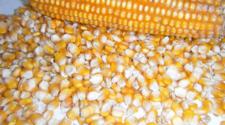 Patentan método de recubrimiento para semillas que las protege de plagas