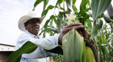 Por qué no debemos regatear a los pequeños productores