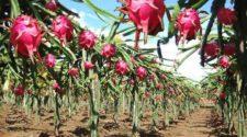 Certificarán a productores orgánicos de Morelos