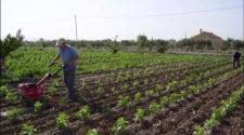 Crece 20% la superficie ecológica mundial